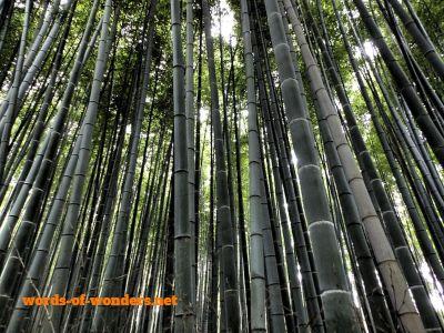 words wonders arashiyama