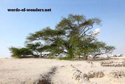 words wonders arbre de vie