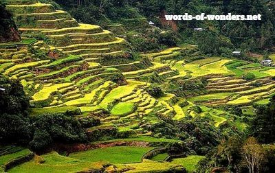 Words wonders terrasses de riz de banaue