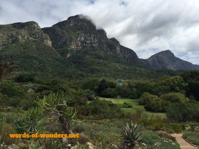 words wonders kirstenbosch