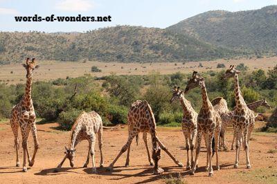 words wonders pilanesberg